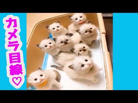 【犬猫動画】見てるだけで可愛い♪癒される猫動画特集#6  - 長さ: 10:09。