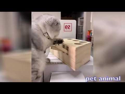 【犬猫動画】かわいい動物、犬、猫たち おもしろペット動画#47  - 長さ: 4:26。