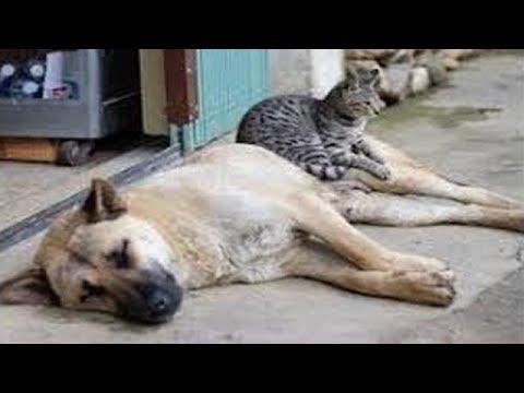【犬猫動画】「面白い動物」あり得ないことをする犬, 猫・おもしろ犬, 猫のハプニング, 失敗集 2019 #1  - 長さ: 6:20。