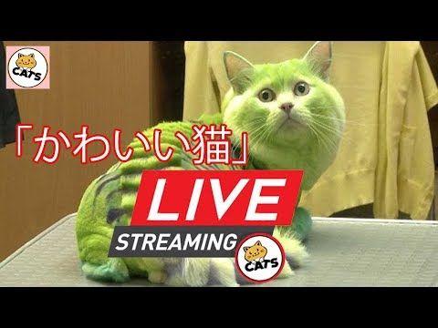 【犬猫動画】「絶対笑う」最高におもしろ犬,猫,動物のハプニング, 失敗画像集  - 長さ: 11:54:58。