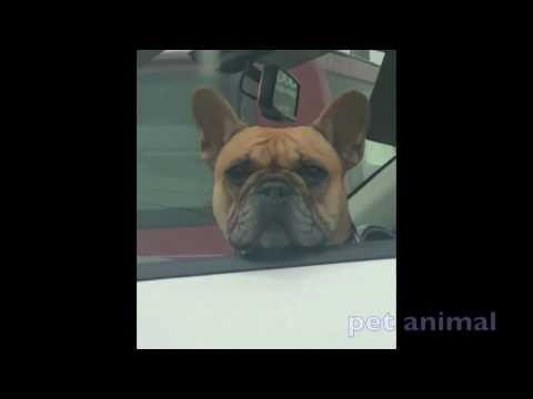 【犬猫動画】かわいい動物、犬、猫たち おもしろペット動画#153  - 長さ: 5:00。