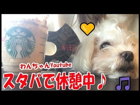 【犬猫動画】【愛犬】スタバで一休み♪  - 長さ: 1:43。