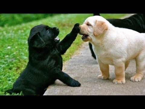 【犬猫動画】あり得ないことをする犬, 猫・おもしろ犬, 猫のハプニング, 失敗集 ・P24  - 長さ: 10:11。