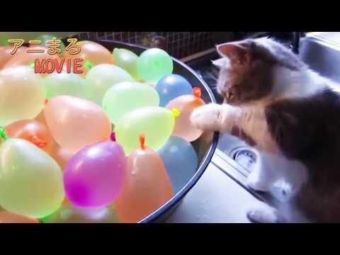 【犬猫動画】犬 猫が風船とバトル!かわいすぎる!  - 長さ: 10:08。