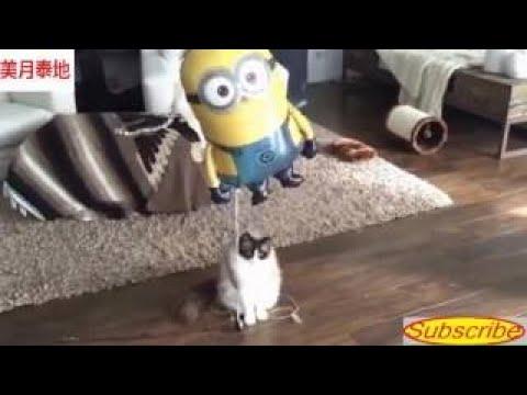 【犬猫動画】.世界でもトップクラスのおかしい猫と犬のダンスと歌 P 23  - 長さ: 21:10。
