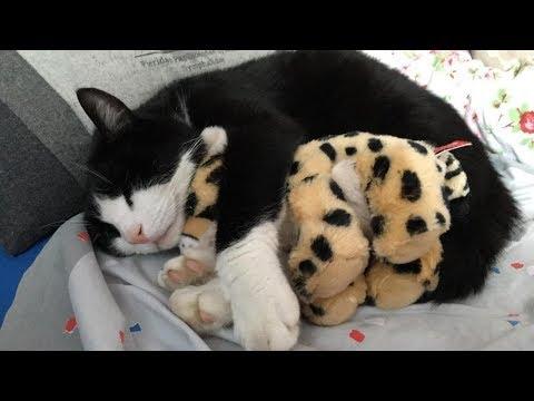 【犬猫動画】猫と犬の褒め言葉、最高に面白い | Love Pet TV  - 長さ: 10:08。