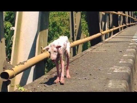 【犬猫動画】路上を当てもなく彷徨い、絶望していた犬。保護され元気になっていく姿に心動かされる。  - 長さ: 1:48。