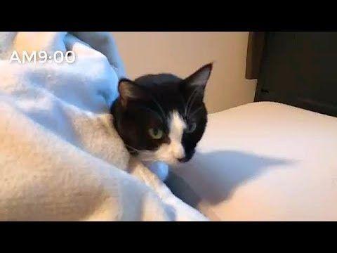 【犬猫動画】猫のおもしろ映像 まとめ [会話の内容が分かる猫・朝起こさなかったと怒る猫] Cat Funny Video Summary  - 長さ: 7:25。