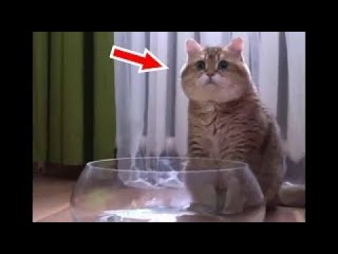 【犬猫動画】「かわいい猫」 猫 おもしろ - 最も面白い猫の動画 2017 #27  - 長さ: 15:03。