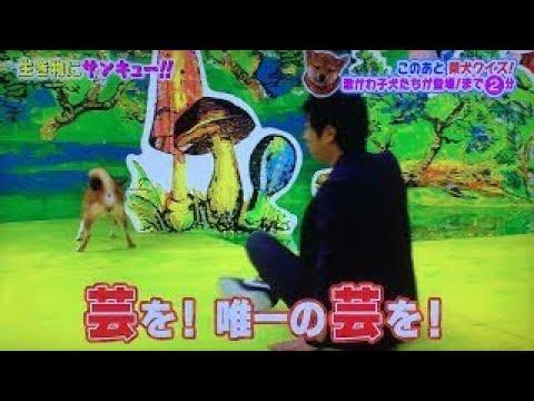 【犬猫動画】生き物にサンキュー01 猫&犬ツンデレ大賞 たんぽぽ パンサー  - 長さ: 15:37。