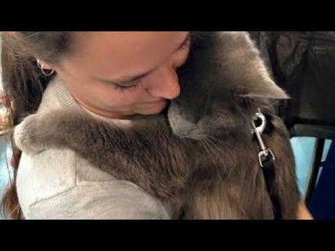 【犬猫動画】盲目の猫は抱っこが大好き!いつまでも忘れられず、おねだりするその理由とは…  - 長さ: 3:29。