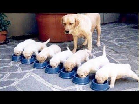 【犬猫動画】あり得ないことをする犬, 猫・おもしろ犬, 猫のハプニング, 失敗集 ・P60  - 長さ: 11:51。