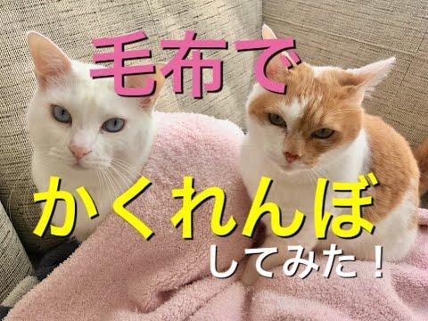 【犬猫動画】毛布でかくれんぼしてみた!  - 長さ: 6:26。