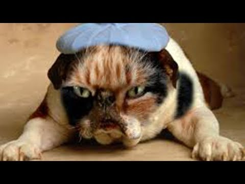 【犬猫動画】猫と犬の褒め言葉、最高に面白い  # 9 | Love Pet TV  - 長さ: 10:27。