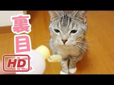 【犬猫動画】鰹節好きな猫ズへの思いやりが裏目に… - the cats and smell of bonito - 2017  - 長さ: 2:33。