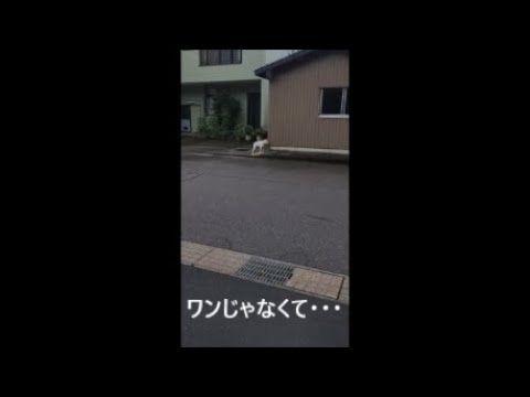 【犬猫動画】ワンと鳴かない犬? ヨン様犬? 冬のソナタ? 最高に笑える犬の動画  - 長さ: 0:42。
