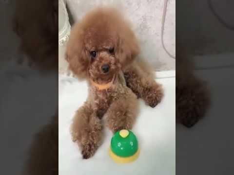 【犬猫動画】「絶対笑う」最高におもしろ犬,猫,動物のハプニング, 失敗画像集 #69  - 長さ: 12:28。