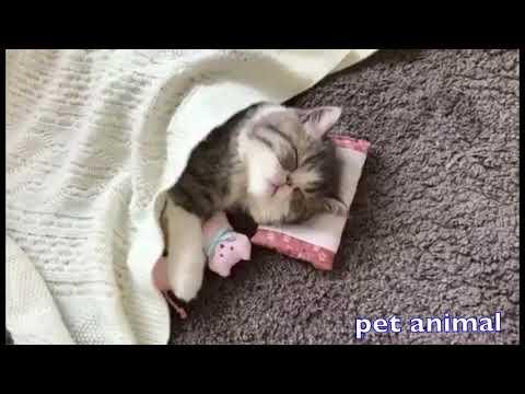 【犬猫動画】かわいい動物、犬、猫たち おもしろペット動画#41  - 長さ: 4:26。