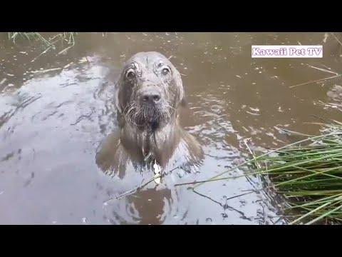 【犬猫動画】泥んこ遊び楽しくて, どうしても帰りたくない犬の反応が超かわいい #1  - 長さ: 10:39。