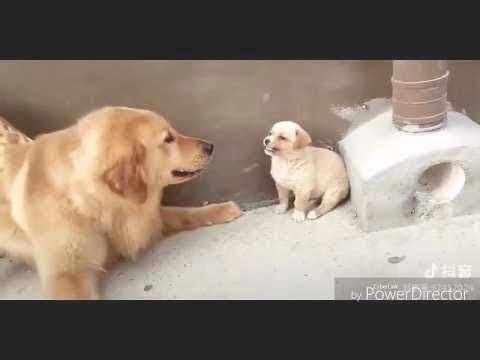 【犬猫動画】「面白い動物」あり得ないことをする犬, 猫・おもしろ犬, 猫のハプニング, 失敗画像集😍😍  - 長さ: 10:17。