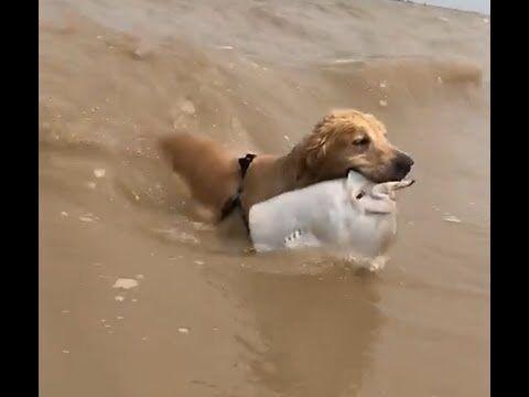 【犬猫動画】「面白い動物」あり得ないことをする犬, 猫・おもしろ犬, 猫のハプニング, 失敗集 #1  - 長さ: 1:09。