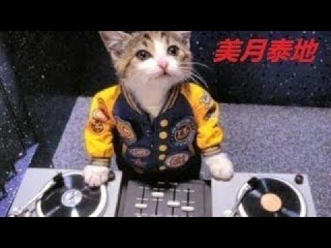 【犬猫動画】.世界でもトップクラスのおかしい猫と犬のダンスと歌 P 23  - 長さ: 23:29。