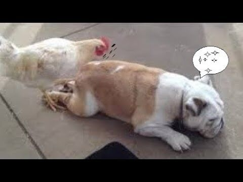 【犬猫動画】2020「絶対笑う」最高におもしろ犬,猫,動物のハプニング, 失敗画像集 #500  - 長さ: 18:37。