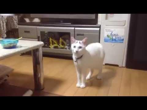 【犬猫動画】これは面白過ぎだわwww.mp4  - 長さ: 0:38。