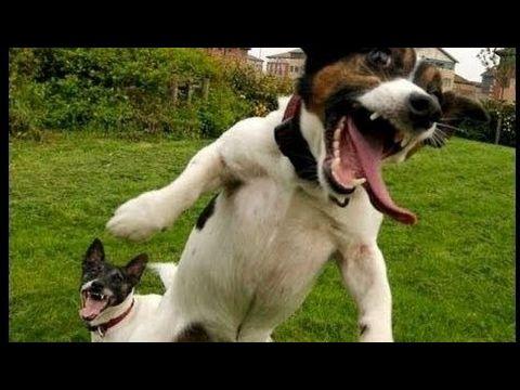 【犬猫動画】面白い犬のビデオ、狂った犬、面白い犬のビデオは、あなたが泣くので、あなたは泣くハード ...  - 長さ: 12:16。