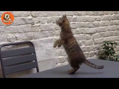 【犬猫動画】犬や猫の滝で腹を粉砕面白いペット  - 長さ: 15:36。