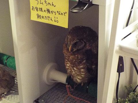 owls-50