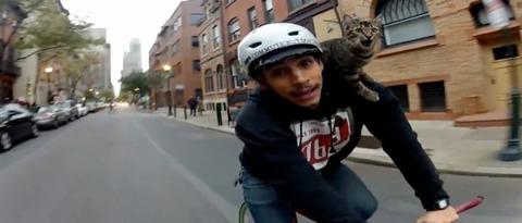 Video-Cat-Bike-Guy