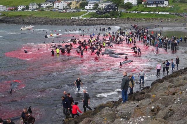 _103042579_whale_killing_23_trianglenews