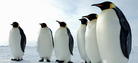 PenguinUpdate