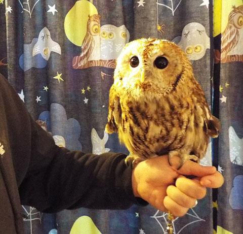 owls-20