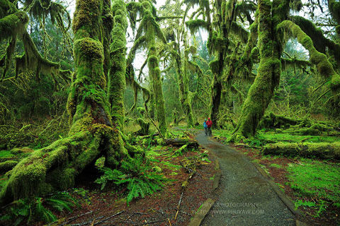 hall-of-mosses-trail-olympic-national-park-washington-