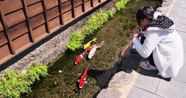 koi-fish-swim-in-drain-japan-thumbnail