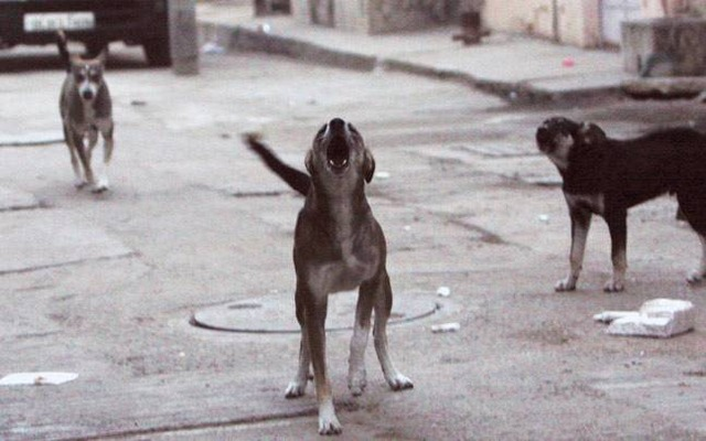 dog-2_647_111615083519