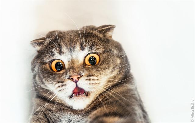 surprised-cat-04