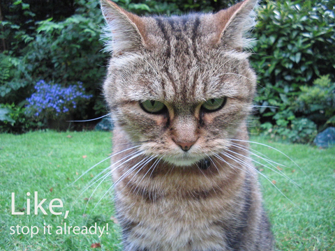 angry-cat-like-stop-it-already