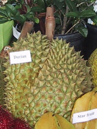 ARS_Durian
