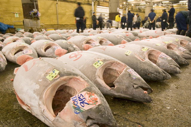 tuna_fishmarket_japan