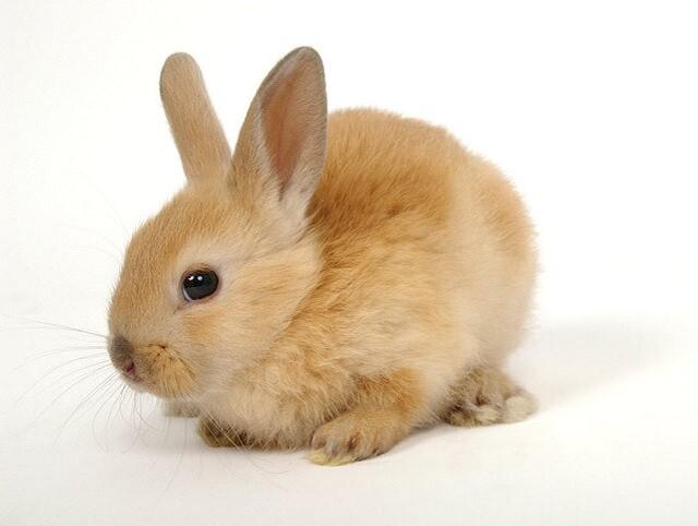 Red_Bunny_Petland_Puppy
