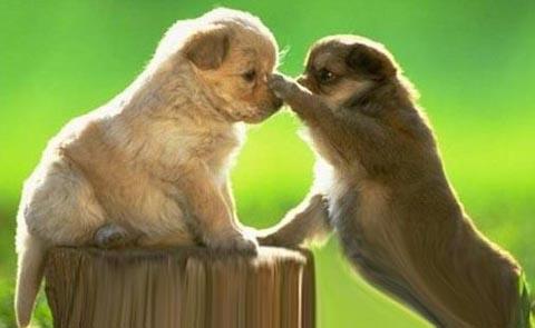 puppyfight