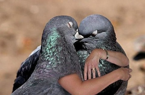 medium-funny-birds-hugging