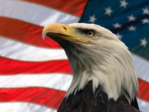 american_eagle-800x600