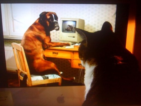 caught-my-cat-watching-a-dog-watching-doggie-porn