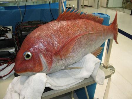 robotic_fish_1_1236815187877