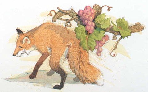 Aesop_Fox&Grape