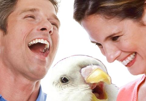 japanesebirdlaughing